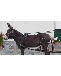 "PFIFF Single ""Donkey"""