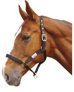 Harry's Horse Headcollar controller