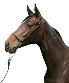 PFIFF In-hand bridle Full