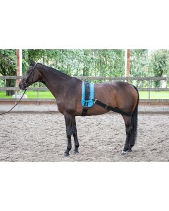 Harry's Horse Lunging belt elastic