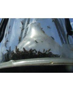 Hofman Horsefly trap Lurking funnel loose