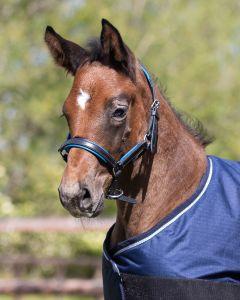 QHP Halter foal leather Spirit