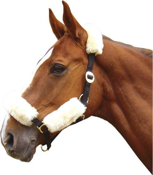 Harry's Horse Merino collar under rugset cream