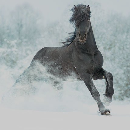 Winter rugs above 165cm (horse)