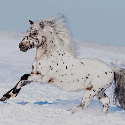 Winter rugs to 165cm (shetland pony)